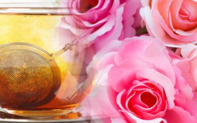 Rose rooibos tea drink