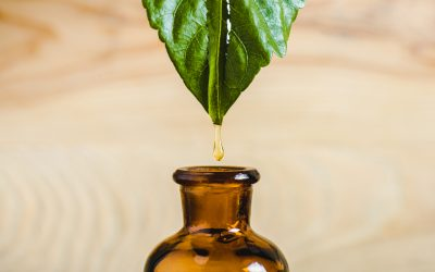 Rooibos skin care products demand grow